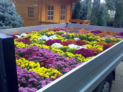 Productie flori. Poza 378
