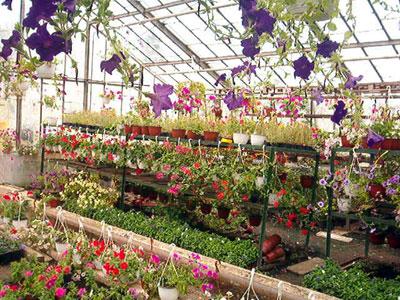 Productie flori. Poza 379