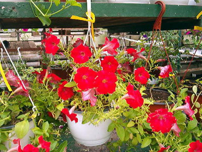 Productie flori. Poza 380