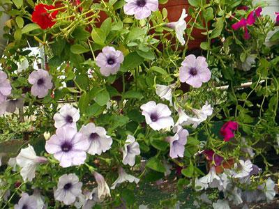 Productie flori. Poza 381