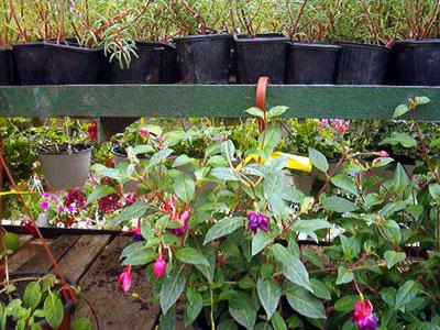 Productie flori. Poza 387
