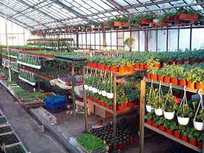 Productie flori. Poza 389