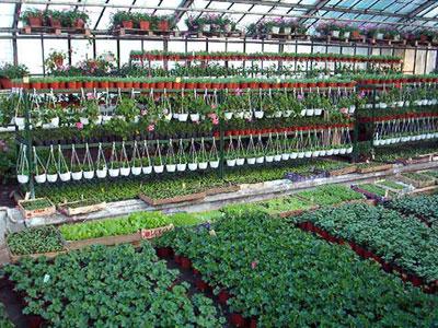 Productie flori. Poza 391
