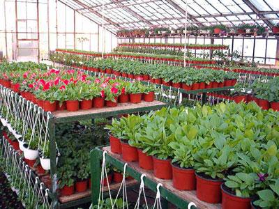 Productie flori. Poza 392