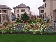 Proiecte rezidentiale. Poza 215