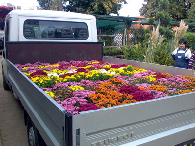 Productie flori. Poza 377